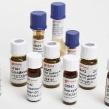 经典品牌邻笨二甲基酯酸绝育药供应价格