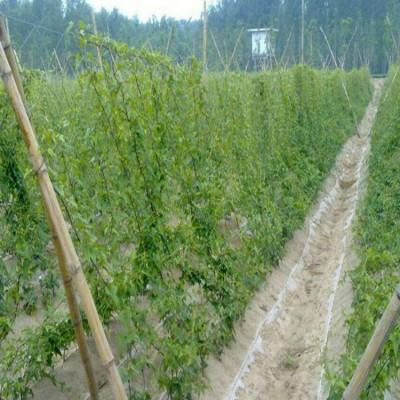 甘肃省网孔17*17厘米植物生长攀爬网