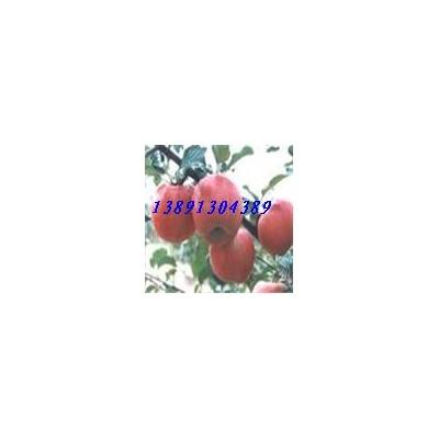 2020陕西纸袋红富士苹果产地批发行情